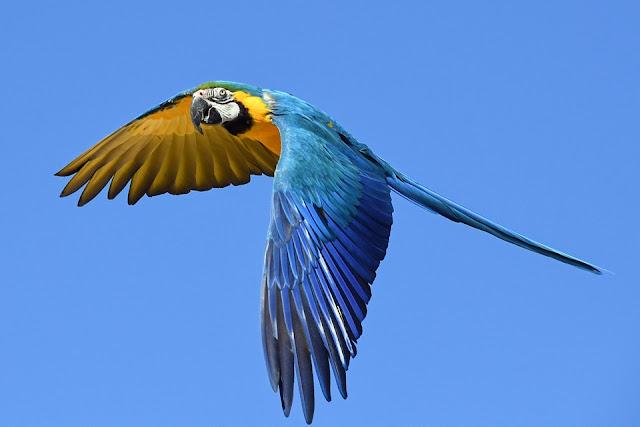 The most famous parrot kinds