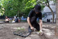 secret seeders plant edible veggies for inner-city poor