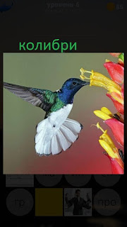 389 фото колибри прилетела на цветок 6 уровень