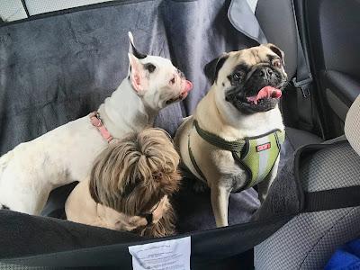 Bark's Club Miami and Miami Springs dog boarding Miami, Miami cheap dog boarding