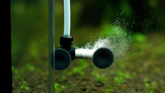 Cara Membersihkan Diffuser CO2 Aquascape