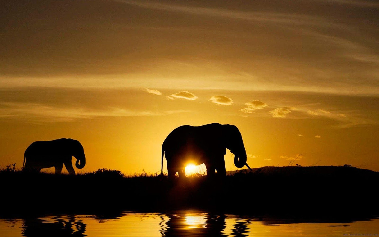 Safari Wallpapers Nature HD Wallpapers