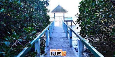 mangrove trail pantai bama baluran