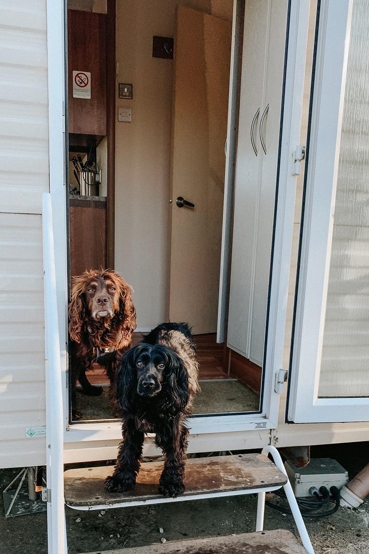 dog friendly caravan park