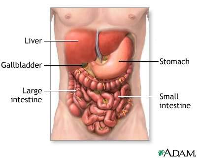 Image result for पेट