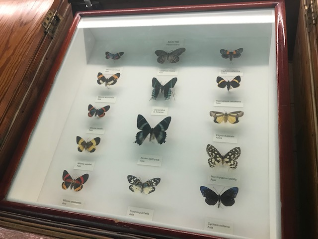 Tring, Natural History Museum, Moths, Butterflies