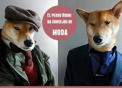 El perro Bodhi y sus consejos de Moda