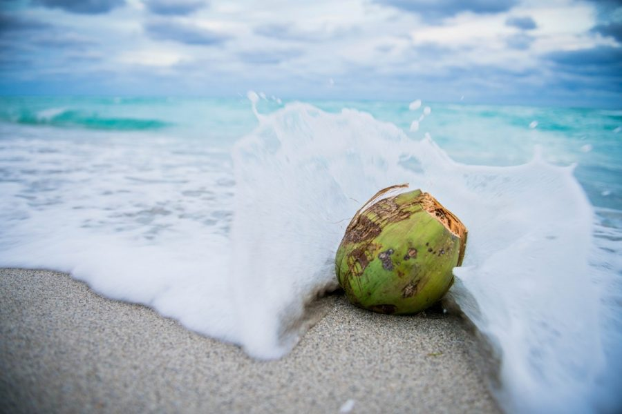 What are the benefits of coconut oil for the skin?