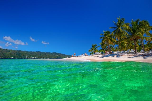 sea and beach with palm tree scene