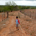 Programa de combate à desertificação começou a ser implantado no Piauí