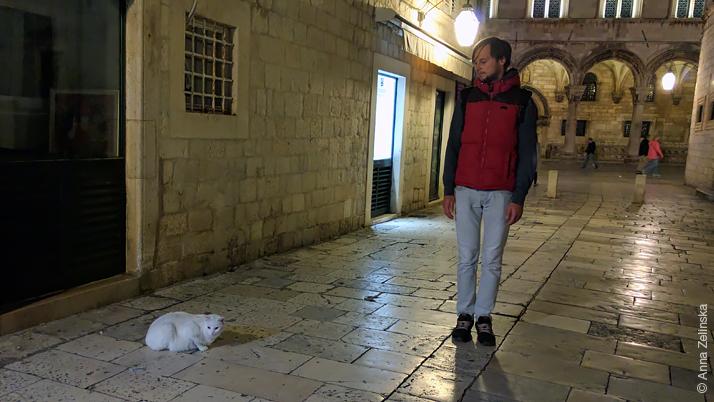 Огромный кот в Старом городе, Дубровник