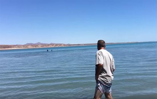 Grande tubarão branco nadando em águas rasas - Img 1