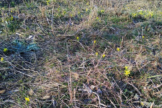 Весна пришла в Луганск