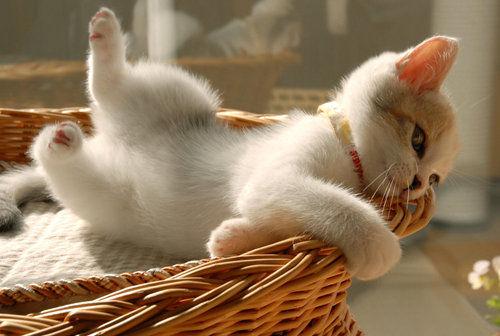 Bom Dia Cat: Dulce Arteonline: Bom Dia Com Lindas Imagens De Gatinhos