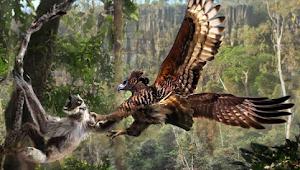 10 Burung Terganas Yang Ada Di Dunia