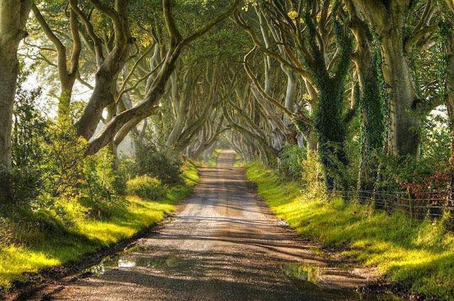 šume slike
