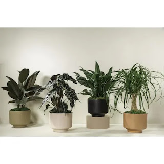 https://www.lowes.com/pd/LiveTrends-36-oz-Assorted-Foliage-Modern-Escapes-in-Ceramic-Planter/1001309964