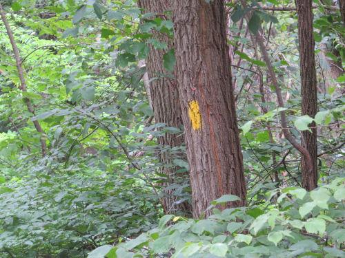 yellow painted blaze on tree