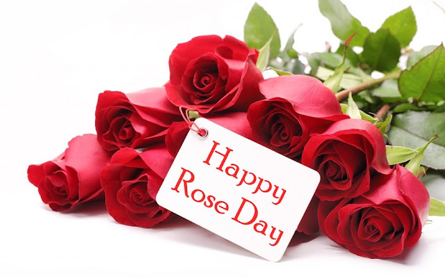 Rose Day Images, Happy Rose Day Images, Happy Rose Day Images