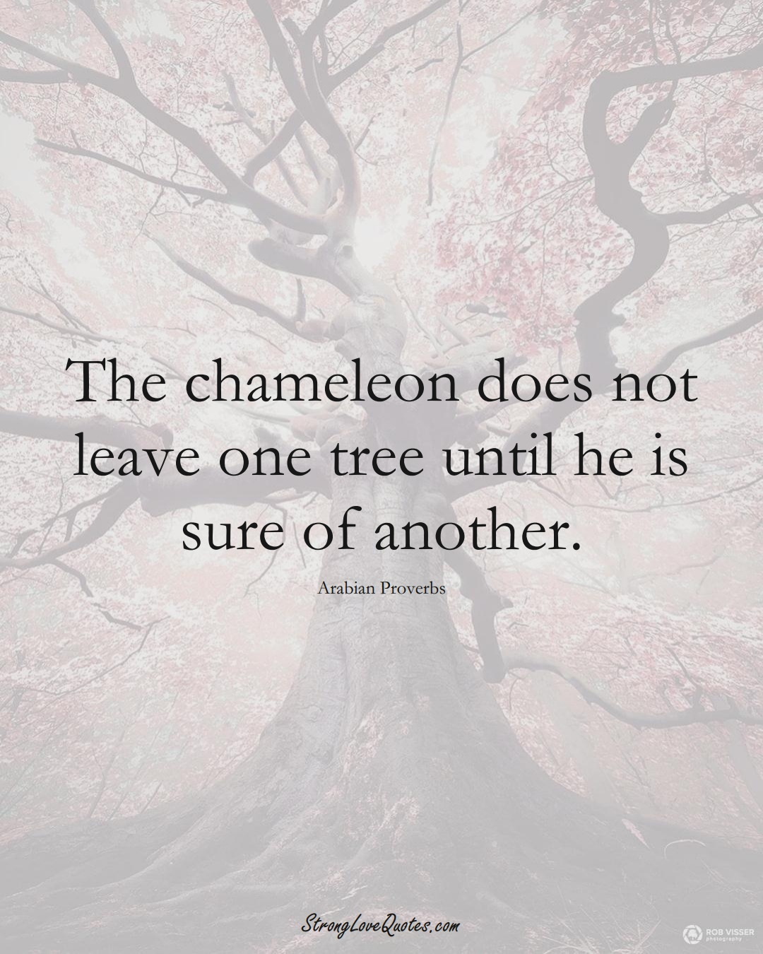 The chameleon does not leave one tree until he is sure of another. (Arabian Sayings);  #aVarietyofCulturesSayings
