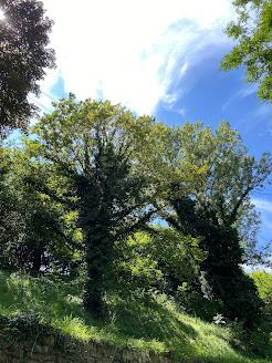 Summer Ivy - Bergamo - Via Felice Cavagnis.