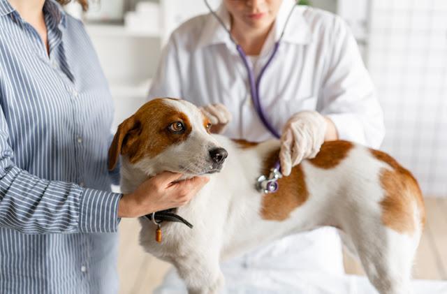 Choroby trzustki u psa – leczenie, objawy, dieta