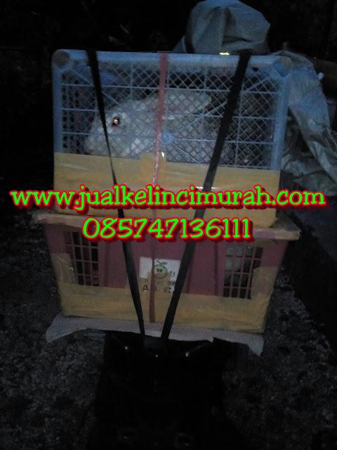 Penjual Kelinci di Jakarta