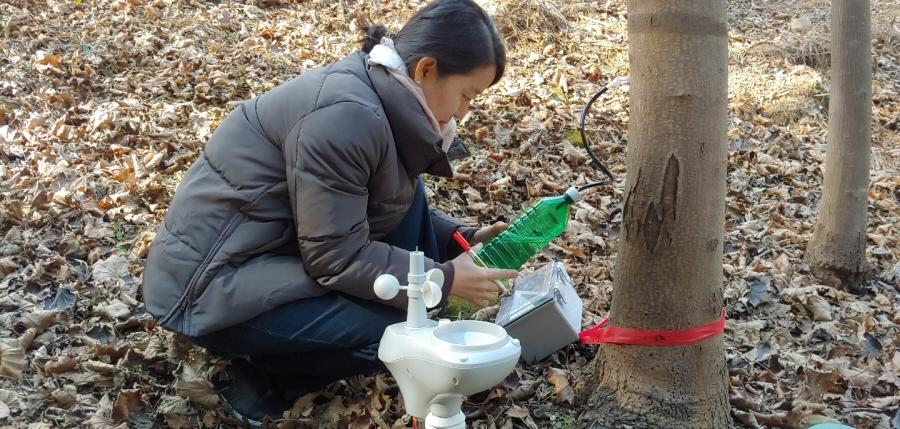국립산림과학원, 고로쇠 및 우산고로쇠 수액 올해 첫 채취