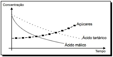 O gráfico a seguir mostra a variação da concentração de três substâncias presentes em uvas, em função do tempo.