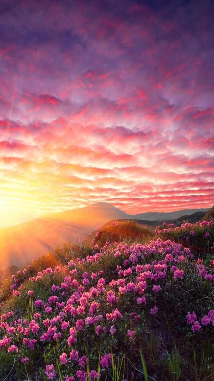 sunrise mountains flowers - photo #25