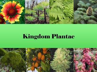 Ciri Ciri Kingdom Plantae dan Klasifikasi Kingdom Plantae (TUMBUHAN)
