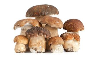 Sagra del fungo porcino 23 e 24 settembre  Motta Visconti (MI)