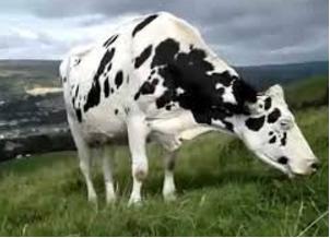 Soal perbandingan sapi dan kambing makan rumput soal siap un 2016 img