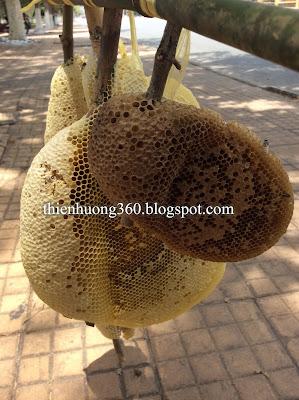 Tổ ong ruồi bắt ngoài tự nhiên