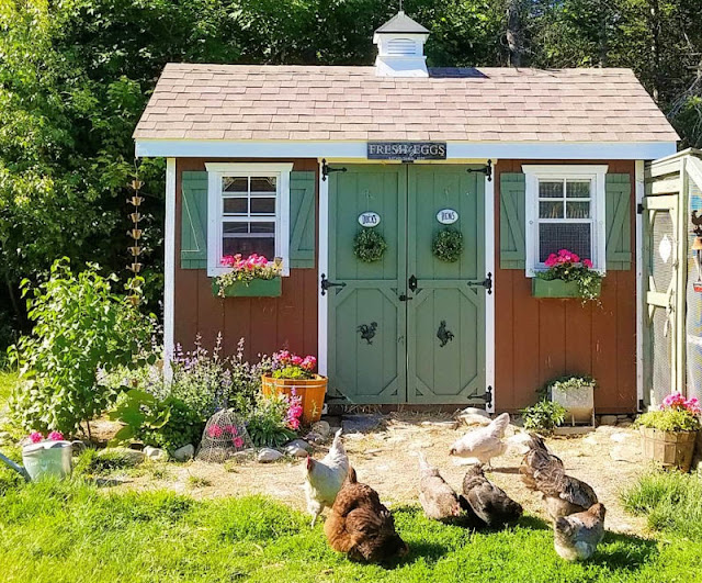 Chicken coop with flowers in the windowboxes