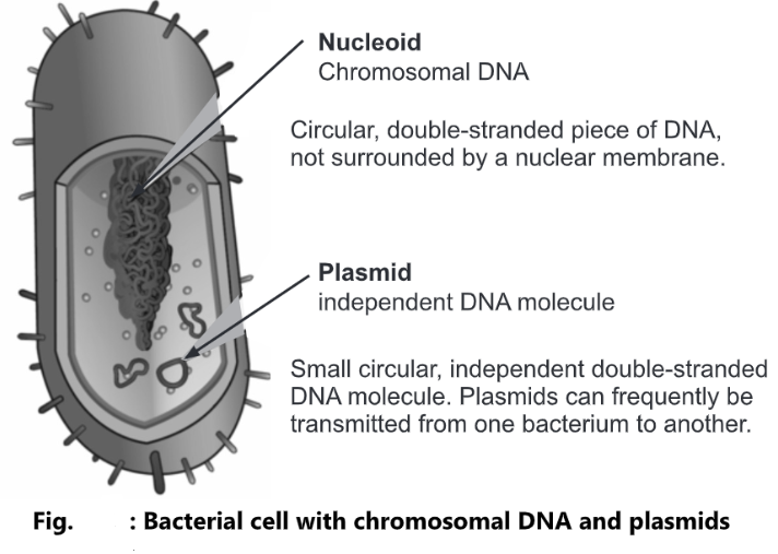 Plasmid: Definition, Types and Function
