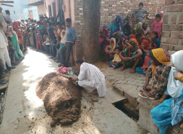 woman buried in cow poop