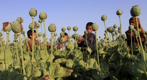NARCO WARS: TRUMP BOMBS TALIBAN DRUG FACTORIES