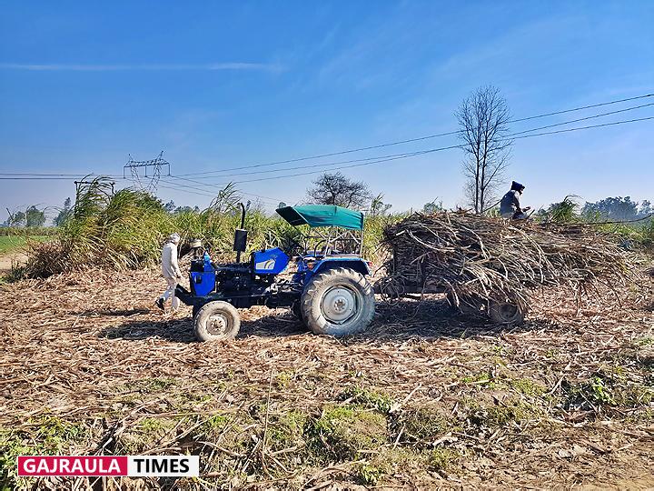 sugarcane-farmer-gajraula