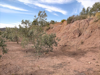 Keuper de Chella y campos de olivos, Valencia, España