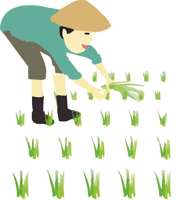 nông dân- sứ mệnh trồng trọt, chăm sóc lương thực, thực phẩm