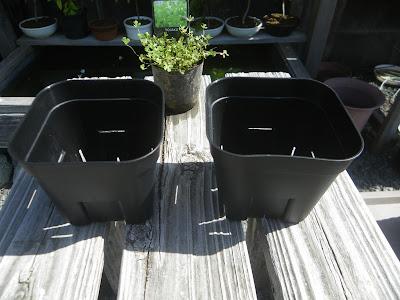 プラスチック製の鉢