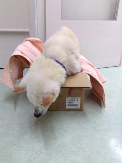 cães paralisados