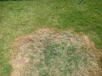 Veja como recuperar a grama morta