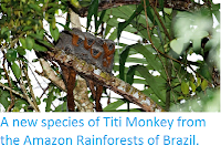 http://sciencythoughts.blogspot.co.uk/2015/03/a-new-species-of-titi-monkey-from.html