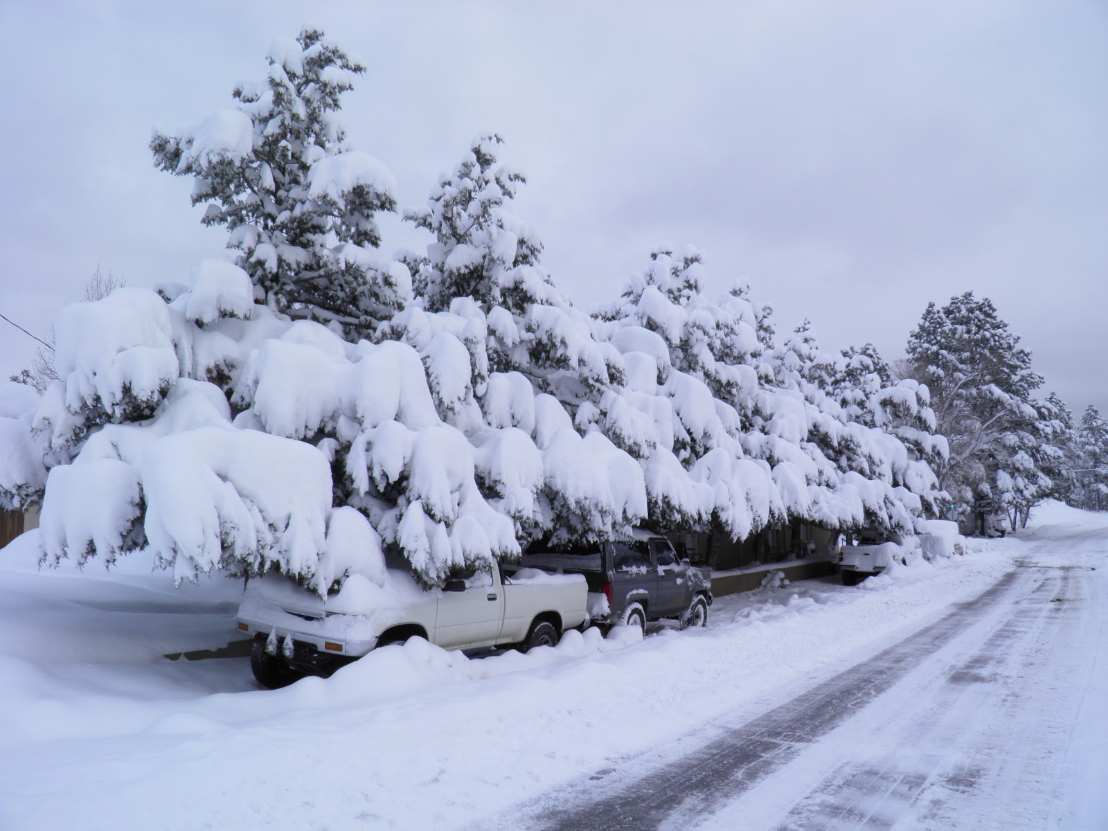 walking flagstaff: monday morning after snow storm