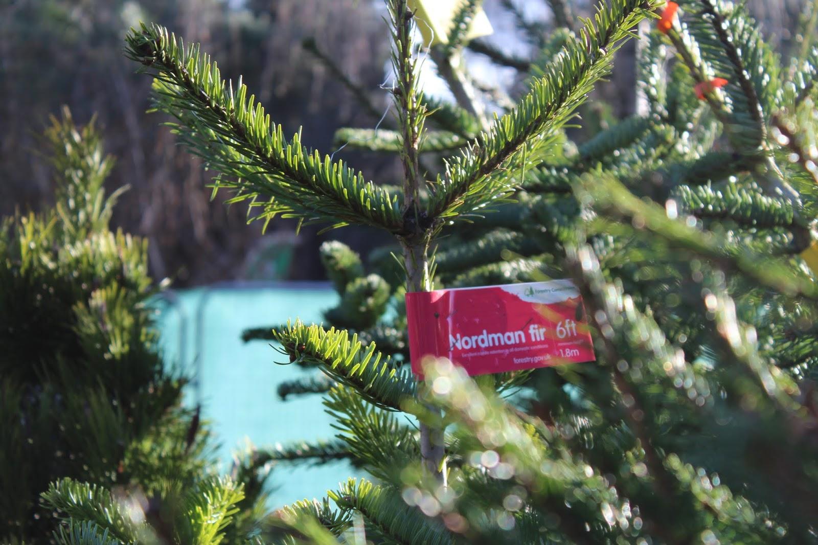 The Joys Of Christmas.Blogmas Day 17 The Joys Of A Real Christmas Tree