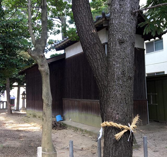 元宮諏訪神社六本松より社殿を見る(2017年7月29日撮影)