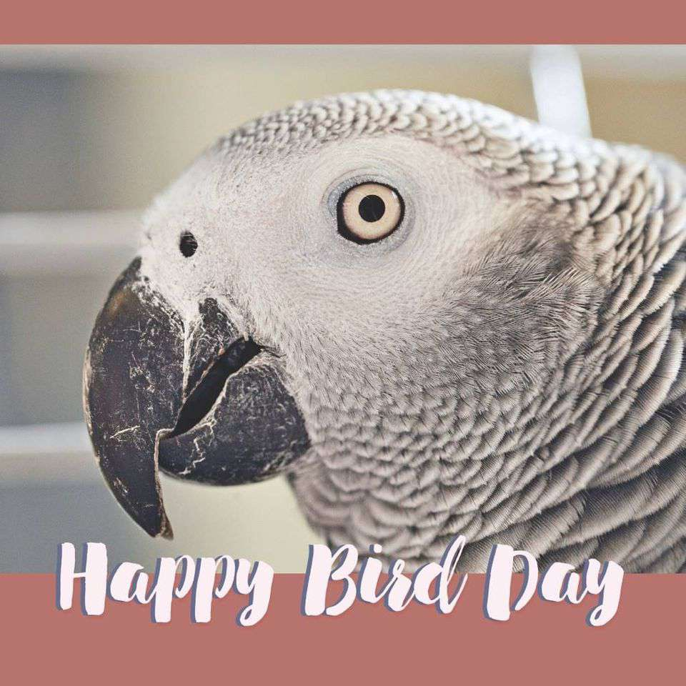 National Bird Day Wishes Sweet Images