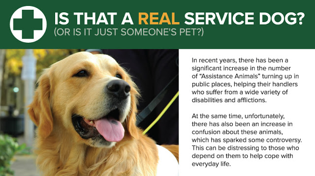 Is That a Dog of Real Service? #infographic